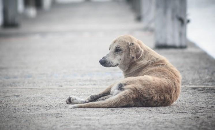 Trebinje: Napuštenim psima trebaju dom i hrana