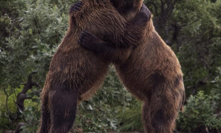 Stisnuti medveda