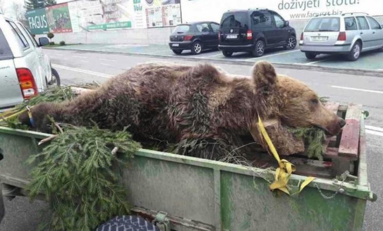 Gdje nestaju lovački trofeji iz BiH: Šta zna medvjed šta je granica!