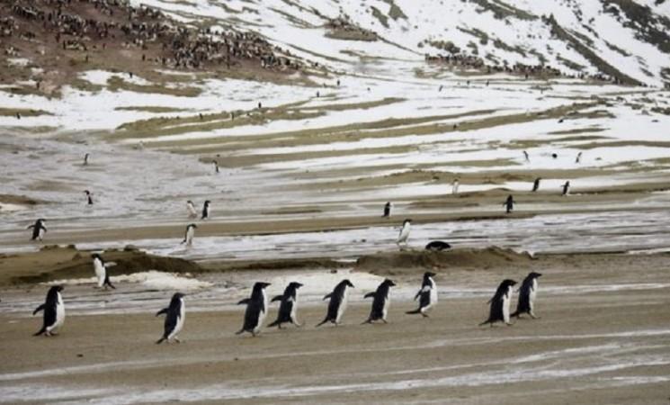 Antarktik i globalno zagrevanje: Prolećnih 20 stepeni u svetu večnog leda