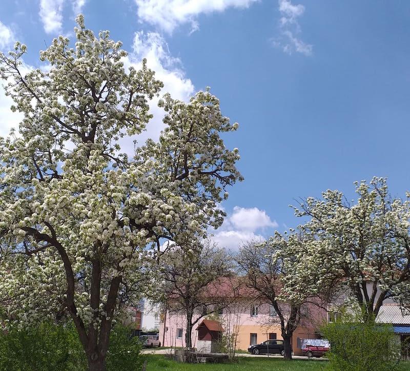 proleće-behar-gacko