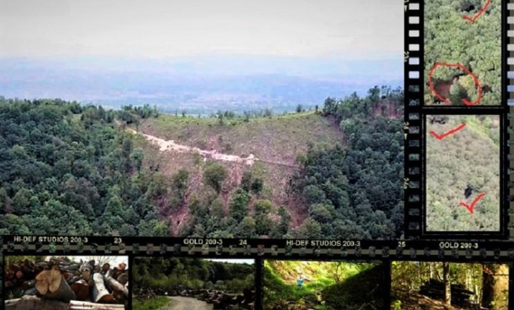 Velika pljačka šuma u regiji Banja Luke, kriminalne grupe zarađuju bogatstva