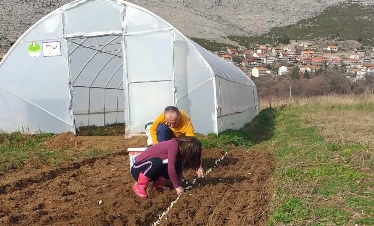 Vujinovići iz Trebinja: Organska proizvodnja povrća kao mali porodični biznis